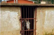 الحمار المكسيكي السجين