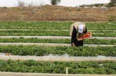 أراض مزارعين
