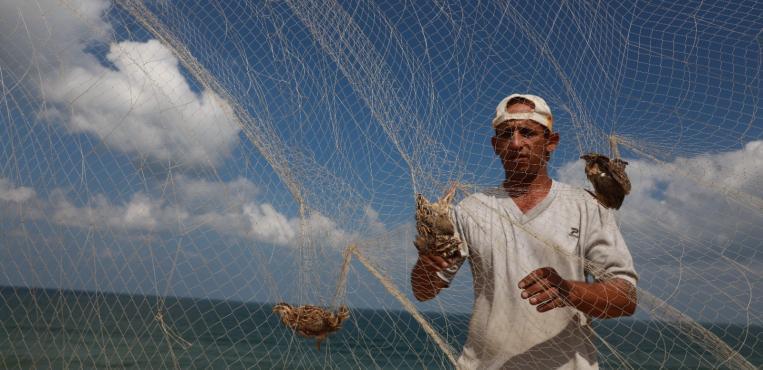 بدء موسم اصطياد طيور السمان المهاجر : الفر : على شاطئ بحر مدينة غزة